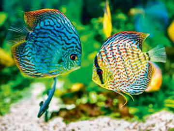 Aquarium-poissons