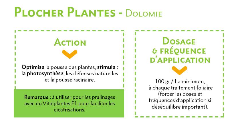 Plocher Plante - Dolomie