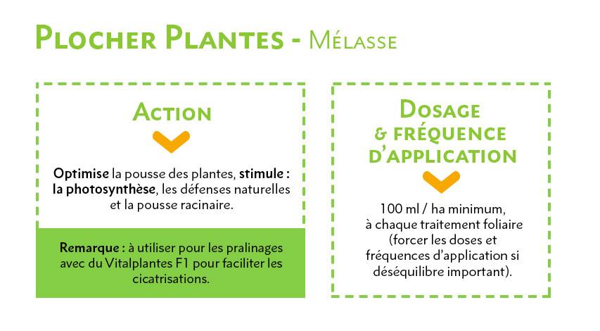 Plocher Plantes Mélasse